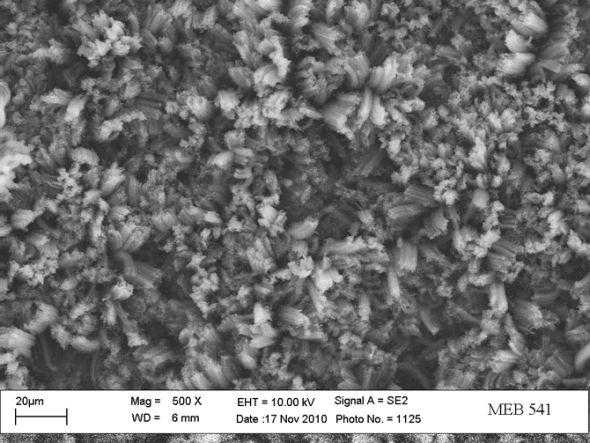 这是一张高度放大的图像,使用电镜拍摄,可以更加清晰地看到这种垂直纳米碳管结构