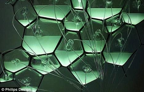 生物灯里的活细菌发出绿色荧光