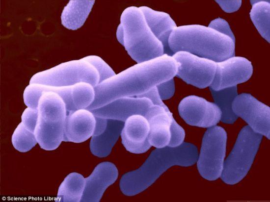 科学家们发现,用这种细菌制造的微生物燃料电池发电量是其它微生物燃料电池的两倍