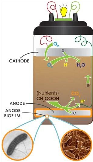 微生物燃料电池示意图
